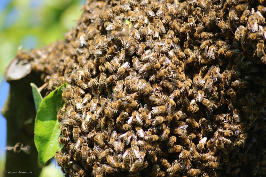 Wilde Bienen