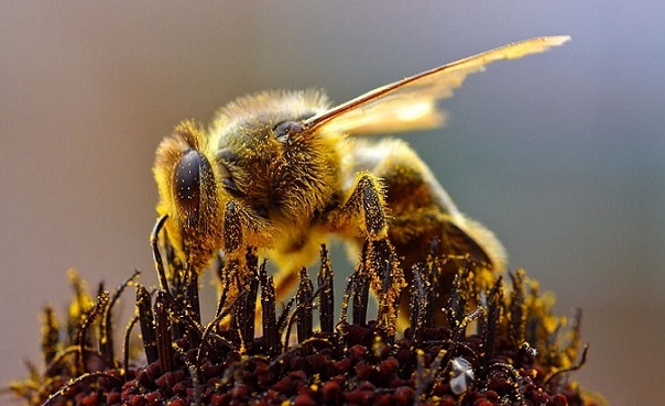 Die Anatomie der Biene mal genauer betrachtet - Honig und Bienen
