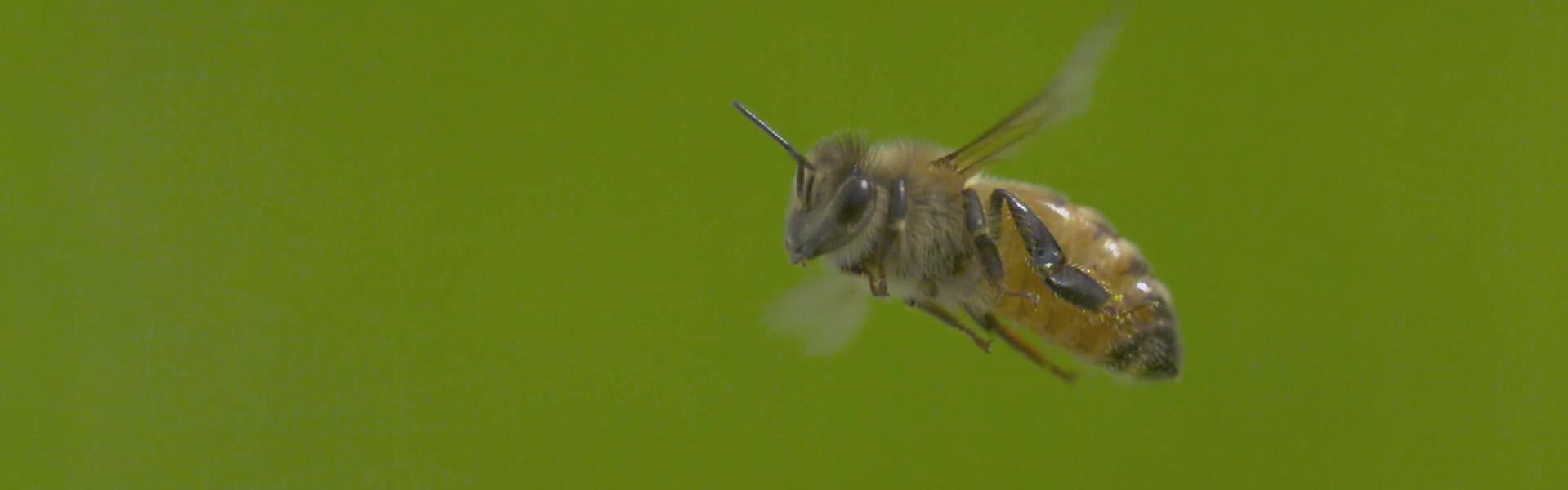 Das genialste Bienen-Video im Internet - Honig und Bienen