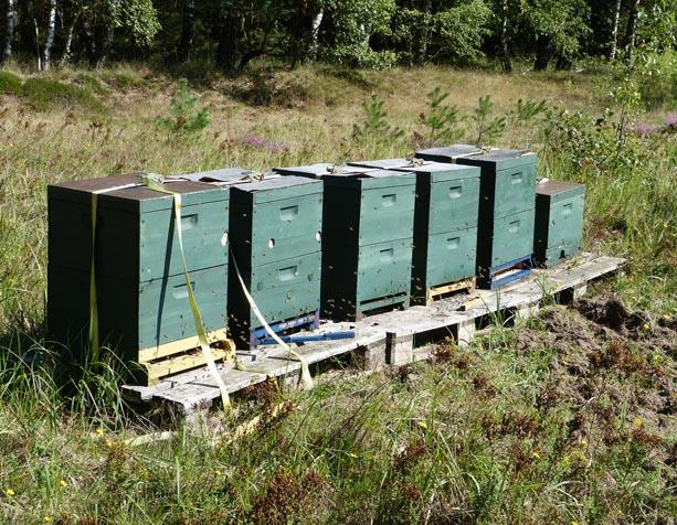 Bienenstöcke sind in der Bio-Imkerei aus Naturmaterialien gefertigt