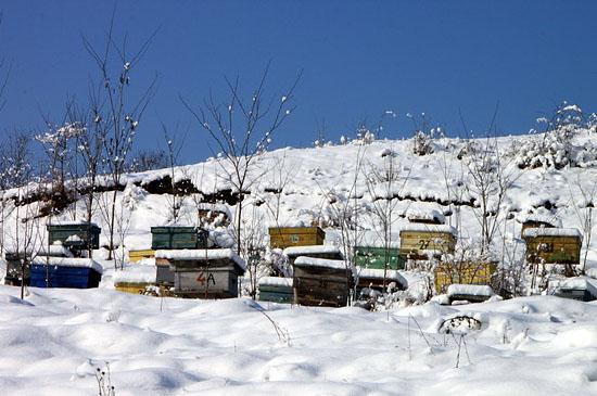 bienen im winter wissen rund um die bienen honig und bienen. Black Bedroom Furniture Sets. Home Design Ideas