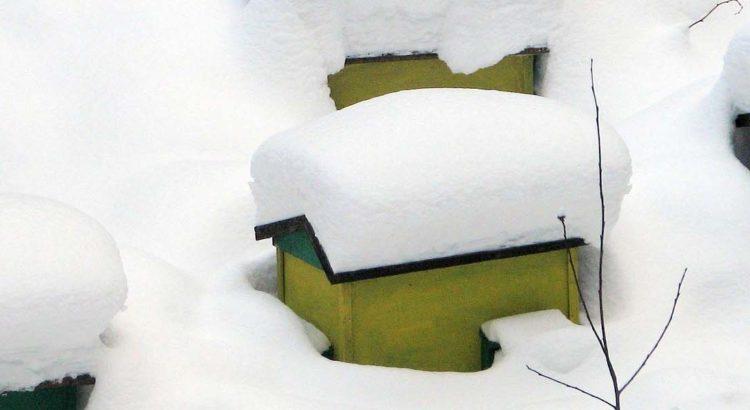 bibbernde bienen bienen im winter honig und bienen. Black Bedroom Furniture Sets. Home Design Ideas
