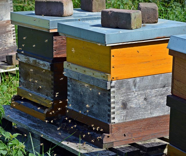bienenbeute wissen rund um die imkerei honig und bienen. Black Bedroom Furniture Sets. Home Design Ideas