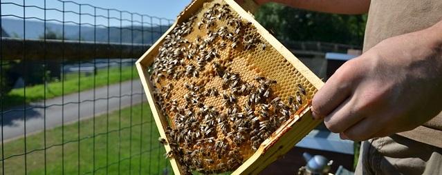 Bienen waren lange vor uns da