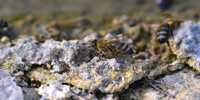 Bienenfreundlicher garten kreativ zu einem for Bienenfreundlicher garten