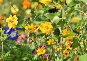 Blumenvielfalt im bienenfreundlichen Garten.