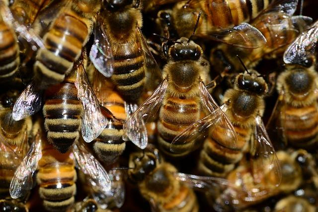 Bienen müssen auch schlafen