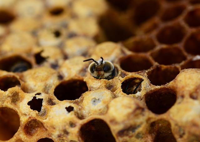 Bienen schlafen außergewöhnlich