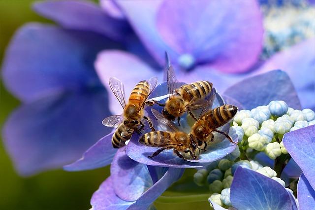 Bienen lieben Wildpflanzen.