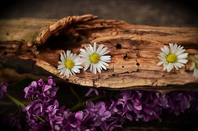 Ein bienenfreundlicher Garten beinhaltet Nisthilfen und Baumaterial für die Insekten.