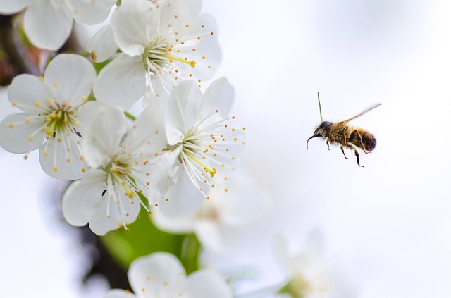Bienen wissen, wie sie sich orientieren müssen
