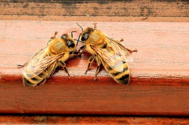 Warum tanzen Bienen?