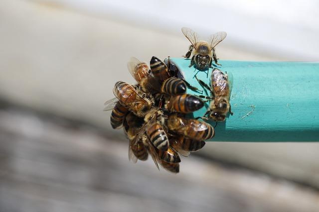 Bienen kommunizieren per Tanz.
