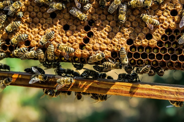 Pollen und Wachs werden auch in Waben gelagert.