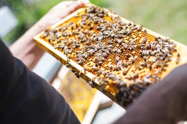 Perga ist das Brot der Bienen.