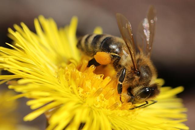 Es gibt zahlreiche Honigsorten