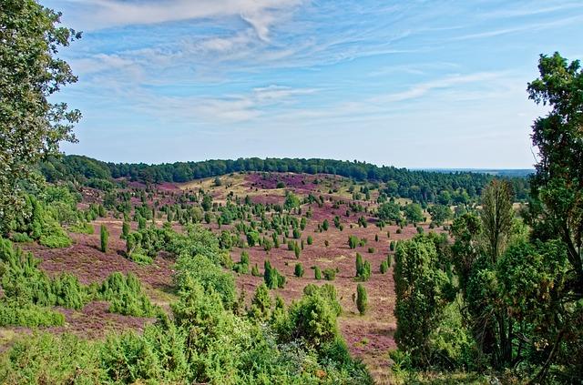 Lüneburger Heide: Ein Naturparadies.