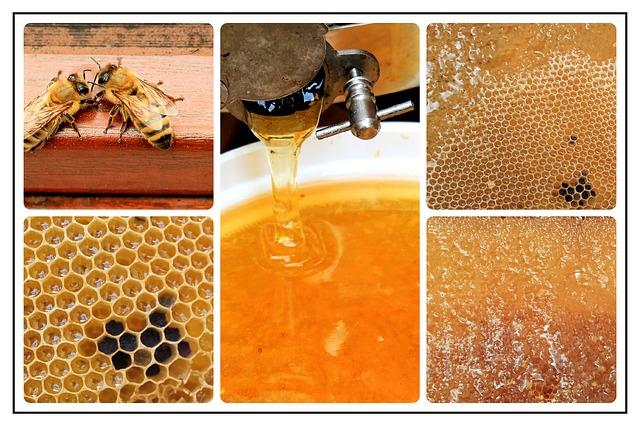 Honig kann erst geerntet werden, wenn der Wassergehalt stimmt.