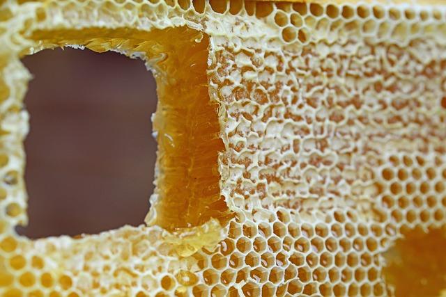 Honigwabe mit Zuckerarten.