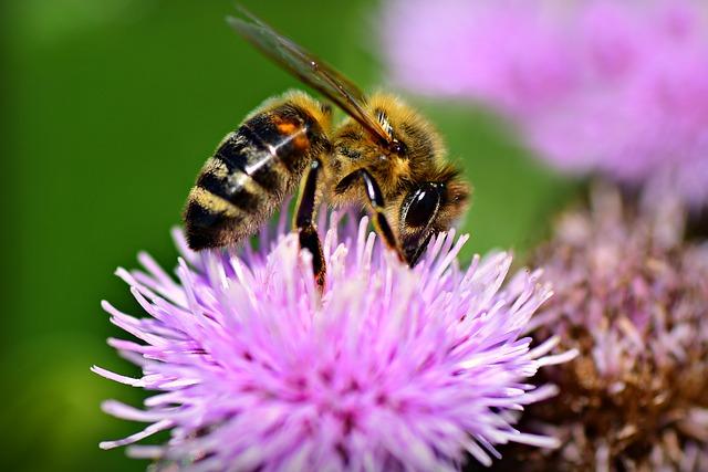 Aus Pflanzennektar wird später Honig.