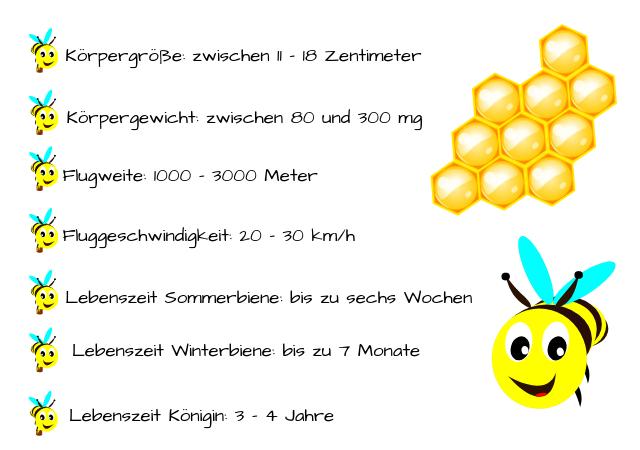 Bienen im Detail