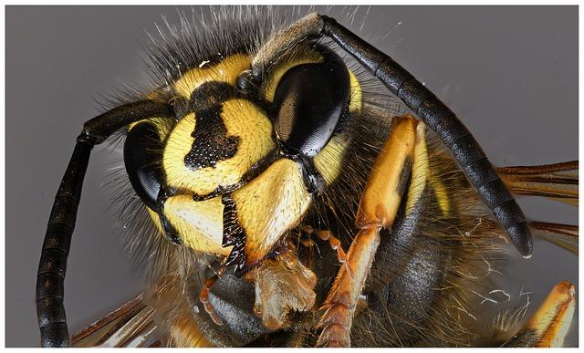 Wie Sehen Bienen Wie Finden Sie Sich Optisch Zurecht Es Ist Spannend