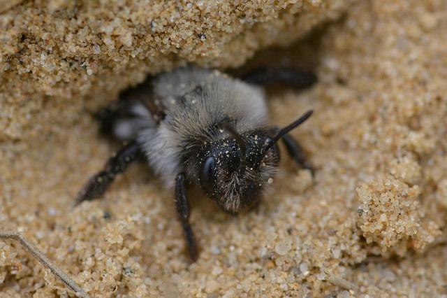 Es wird Zeit, wilde Honigbienen zu erforschen.