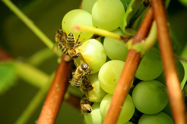 Bienen mögen auch gerne Obst.