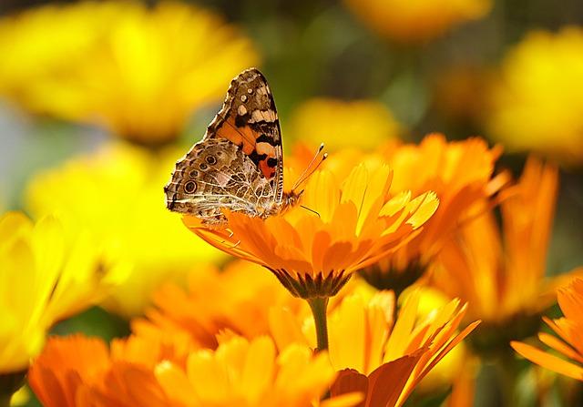 Bienenfreundliches Gärtnern