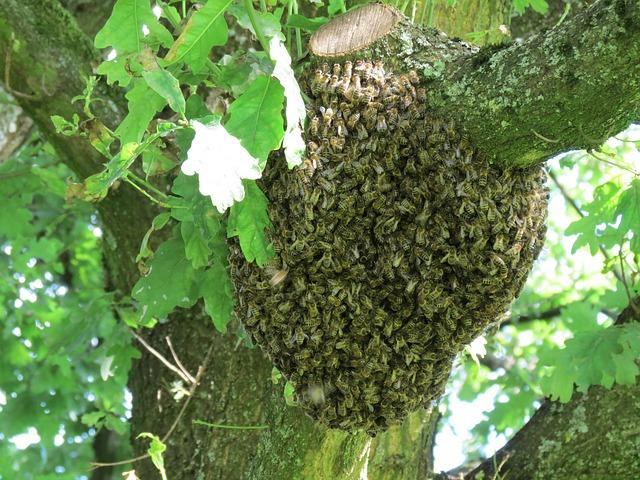 Die Bienentraube