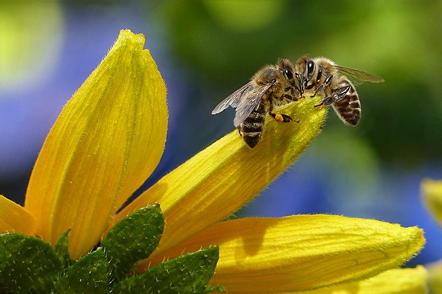 Bienenmann oder Bienenmädchen?