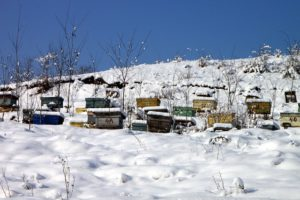 Das Bienenvolk wird auf den Winter vorbereitet