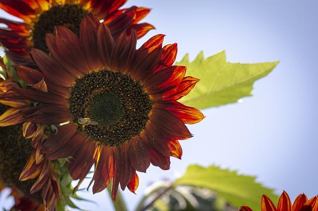 Das Bienenjahr endet im September