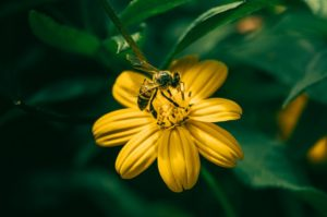 fleißige Sammelbiene - Charakter von Bienen