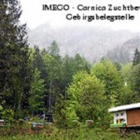 IMEGO Reinzuchtköniginnen sofort lieferbar - Österreich - Carnica!
